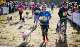 Примите участие в забеге с собаками на Лисьей горе!